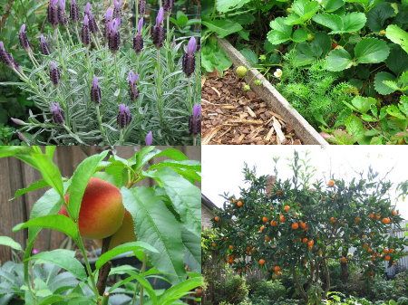 Deep Green Permaculture The Sustainable Organic