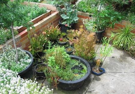 Picture_Water Garden & Carnivorous Plants
