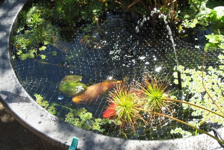 03 the results deep green permaculture for Growing plants in water with fish