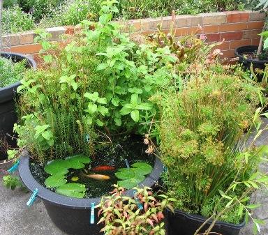 Picture_Water Garden