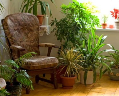 Indoor Plants stock Photo