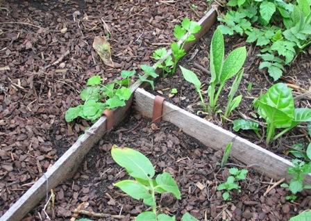 Raised garden beds deep green permaculture - Garden metal edging strip ...