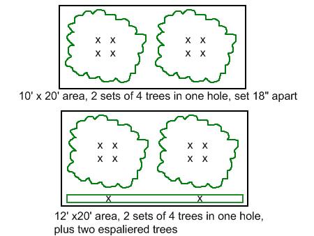 High Density Planting 02