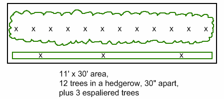 High Density Planting 04