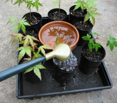 Self Watering Tray_09