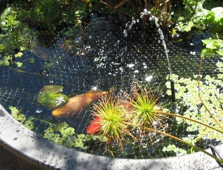 Building a small water garden deep green permaculture for Koi pond care