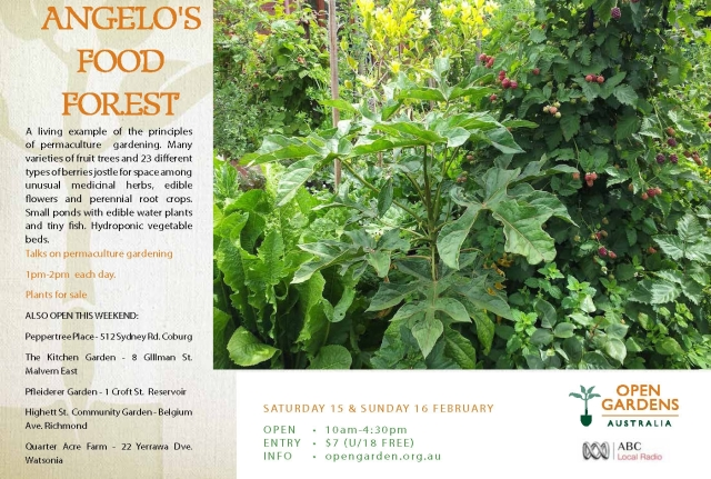 Flyer - Angelo's Food Forest