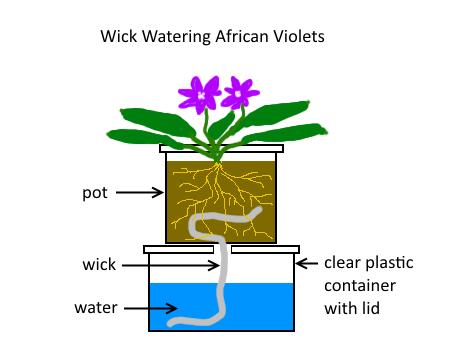 Wick-Watering_thumb3