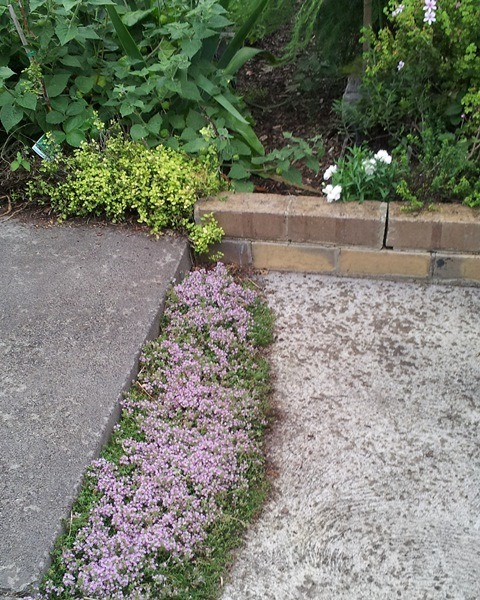 How To Choose The Right Lawn Alternatives Deep Green Permaculture