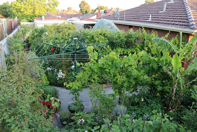 The Birth of a Permaculture Food Forest – Before & After Photos