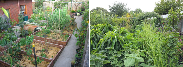 The Birth Of A Permaculture Food Forest Before After Photos Deep Green Permaculture