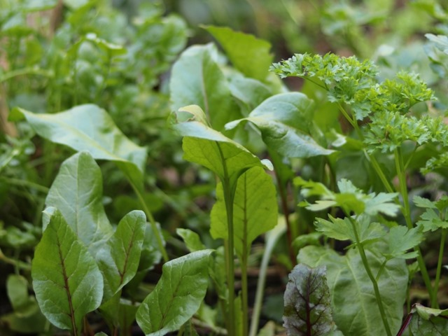 Chop and Drop Gardening (Sheet Composting)