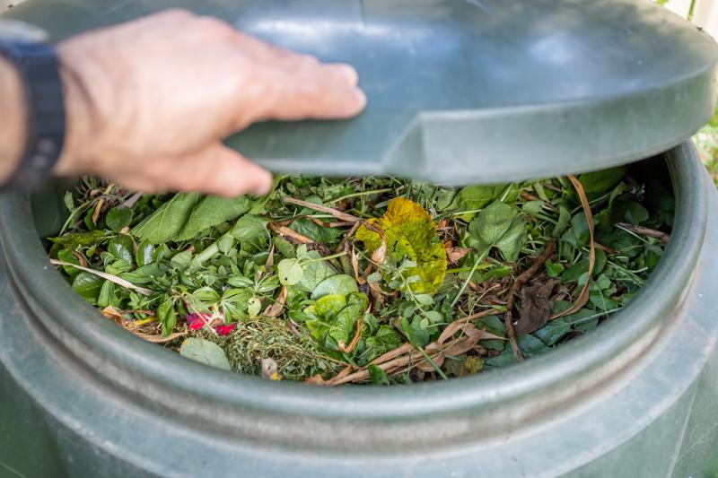 compost bin contents